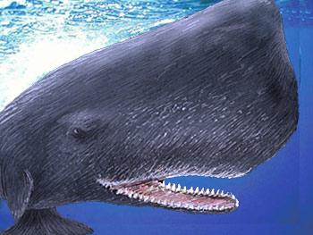 クジラの画像 p1_39